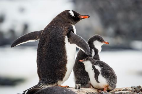 【海钻号】经典南极探索-南极大陆深度+巴西21日之旅