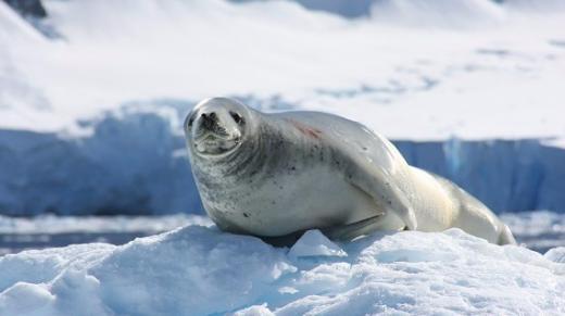 【海钻号】经典南极探索-南极大陆深度+南美四国30日之旅